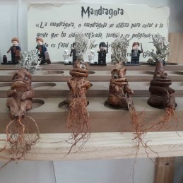 Mandragora Harry Potter